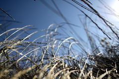 засевает одичалое травой Стоковые Фотографии RF