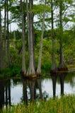 засевайте болотоа ландшафта гравия море травой дороги ribe зеленого северное Стоковые Изображения RF
