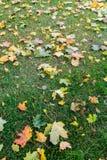 Засевайте заем травой с листьями осени на ем Стоковые Фотографии RF