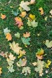 Засевайте заем травой с листьями осени на ем Стоковое Изображение