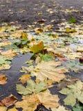 Засевайте заем травой с листьями осени на ем Стоковая Фотография