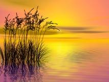 засевайте заход солнца травой Стоковое Изображение