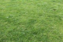 Засевайте зеленоватый желтый цвет травой стоковое изображение rf