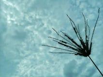 засевайте небо травой Стоковое фото RF