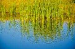 Засевайте отражение травой в штилевой воде Стоковая Фотография RF