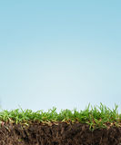 засевайте почва травой