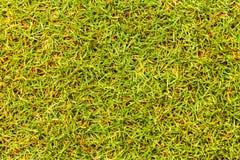 Засевайте поле для гольфа травой текстуры для картины и предпосылки дизайна Стоковая Фотография RF