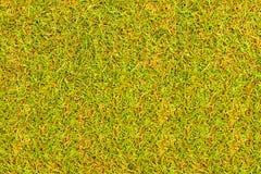 Засевайте поле для гольфа травой текстуры для картины и предпосылки дизайна Стоковые Изображения