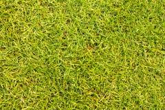 Засевайте поле для гольфа травой текстуры для картины и предпосылки дизайна Стоковое Фото
