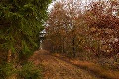 Засевайте путь травой между деревьями в лесе на падении Стоковое Изображение RF