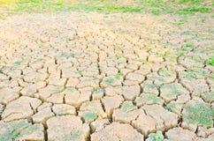 Засевайте расти травой на поле засухи, земле засухи Стоковое фото RF