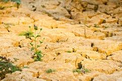 Засевайте расти травой на поле засухи, земле засухи Стоковое Изображение RF