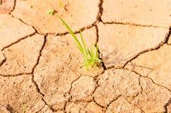 Засевайте расти травой на поле засухи, земле засухи Стоковые Фото