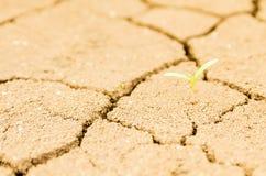 Засевайте расти травой на поле засухи, земле засухи Стоковая Фотография