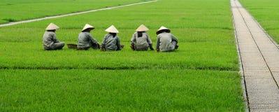 засевайте сидя въетнамские женщины травой Стоковые Изображения