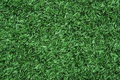 засевайте текстура травой Стоковые Изображения