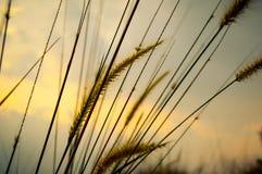 Засевайте тот взмах травой Стоковые Изображения