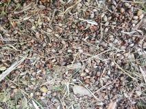 Засевайте художественная предпосылка травой текстуры стоковое фото rf