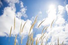 Засевайте цветок травой на белом облаке и голубом небе Стоковые Изображения