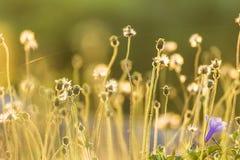 Засевайте цветок травой Стоковые Фото