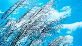 Засевайте цветок травой Стоковые Фотографии RF