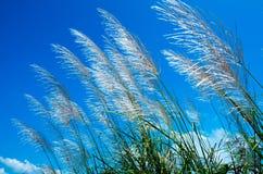 Засевайте цветок травой Стоковые Изображения RF