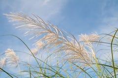 Засевайте цветок травой Стоковое фото RF