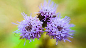 Засевайте цветок травой стоковая фотография