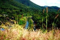 Засевайте цветок травой Стоковая Фотография RF