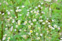 Засевайте цветок травой Стоковое Фото