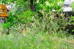 Засевайте цветок травой Стоковые Изображения