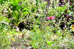 Засевайте цветок травой Стоковое Изображение