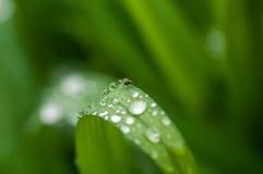 засевайте raindrops травой Стоковые Фотографии RF