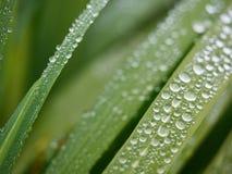засевайте raindrops травой Стоковые Фото