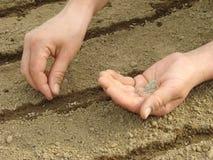засевать семян Стоковое Фото