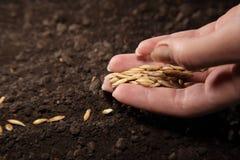 засев семени стоковые изображения