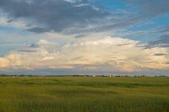 Засеянное зеленое поле Стоковые Изображения RF