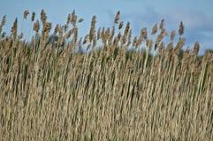 засорители болотоа стоковые фотографии rf