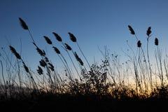 Засорители в ветре стоковое изображение