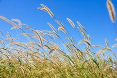 Засорители в осени с предпосылкой голубого неба стоковое фото