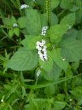 Засорители в полях цветок щупальец стоковое изображение rf