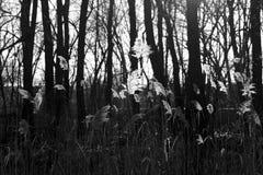 Засорители и листва Стоковое Изображение
