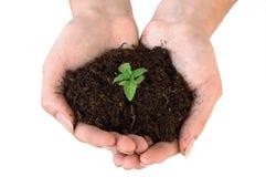 засорители почвы руки Стоковое Изображение