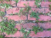 Засорители растя между кирпичами стоковые фото