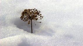 Засоритель в смещении снега Стоковое Фото