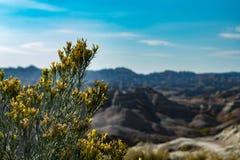 Засоритель желтого salsify и каньон на backgound, национальный парк неплодородных почв, SD, США стоковое фото