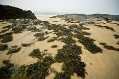 засоритель моря Стоковое Изображение RF