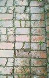 Засорители растя через старый каменный путь Стоковое Изображение RF