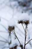 засоритель зимы Стоковое фото RF