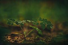 Засоритель на солнечном свете Стоковое Фото